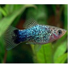 熱帯魚スライドショー ブログパーツイメージ