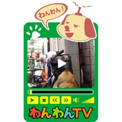 わんわんTV ブログパーツイメージ