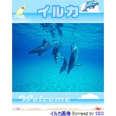 イルカのスライドショー ブログパーツイメージ