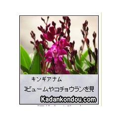 ガーデニング 今月植えるといい植物 ブログパーツイメージ
