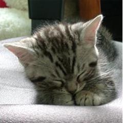 The Cute Kittens Slideshow! ブログパーツイメージ