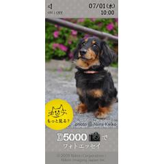 D5000でフォトエッセイ 「猫と犬と、フォト散歩」 ブログパーツイメージ