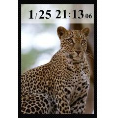 豹時計 ブログパーツイメージ