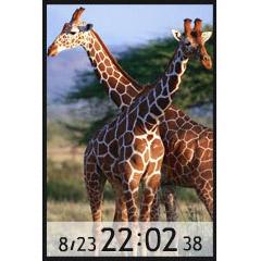 キリン時計 ブログパーツイメージ