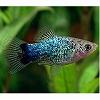 熱帯魚スライドショー ブログパーツ サムネイル