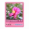 PIXIE×my Picturetown☆カラフルブログパーツ2 サムネイル