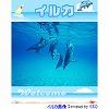 イルカのスライドショー ブログパーツ サムネイル