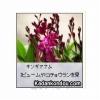 ガーデニング 今月植えるといい植物 ブログパーツ サムネイル