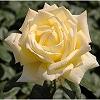 バラの花時計 ブログパーツ サムネイル