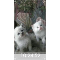 可愛い子猫時計 ブログパーツイメージ